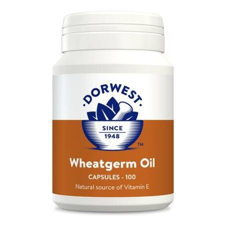 Dorwest Herbs Búzacsíra olaj kapszula