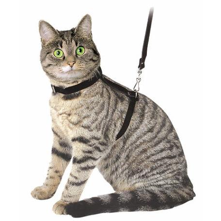 Macskahám pórázzal